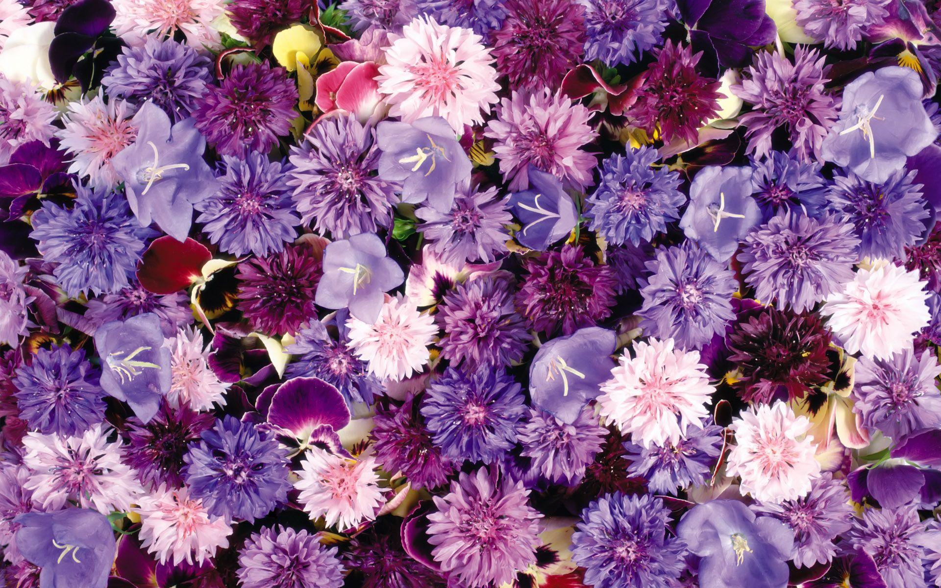 pics of flowers
