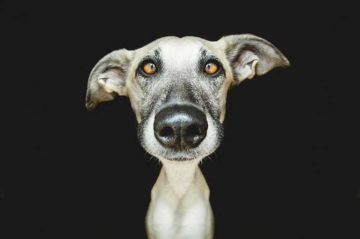 Si nos preguntamos ¿cuál es la especie más popular y una de las que más queremos ? La respuesta es fácil: Los perros.