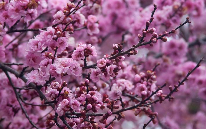 Sfondi giardino primavera