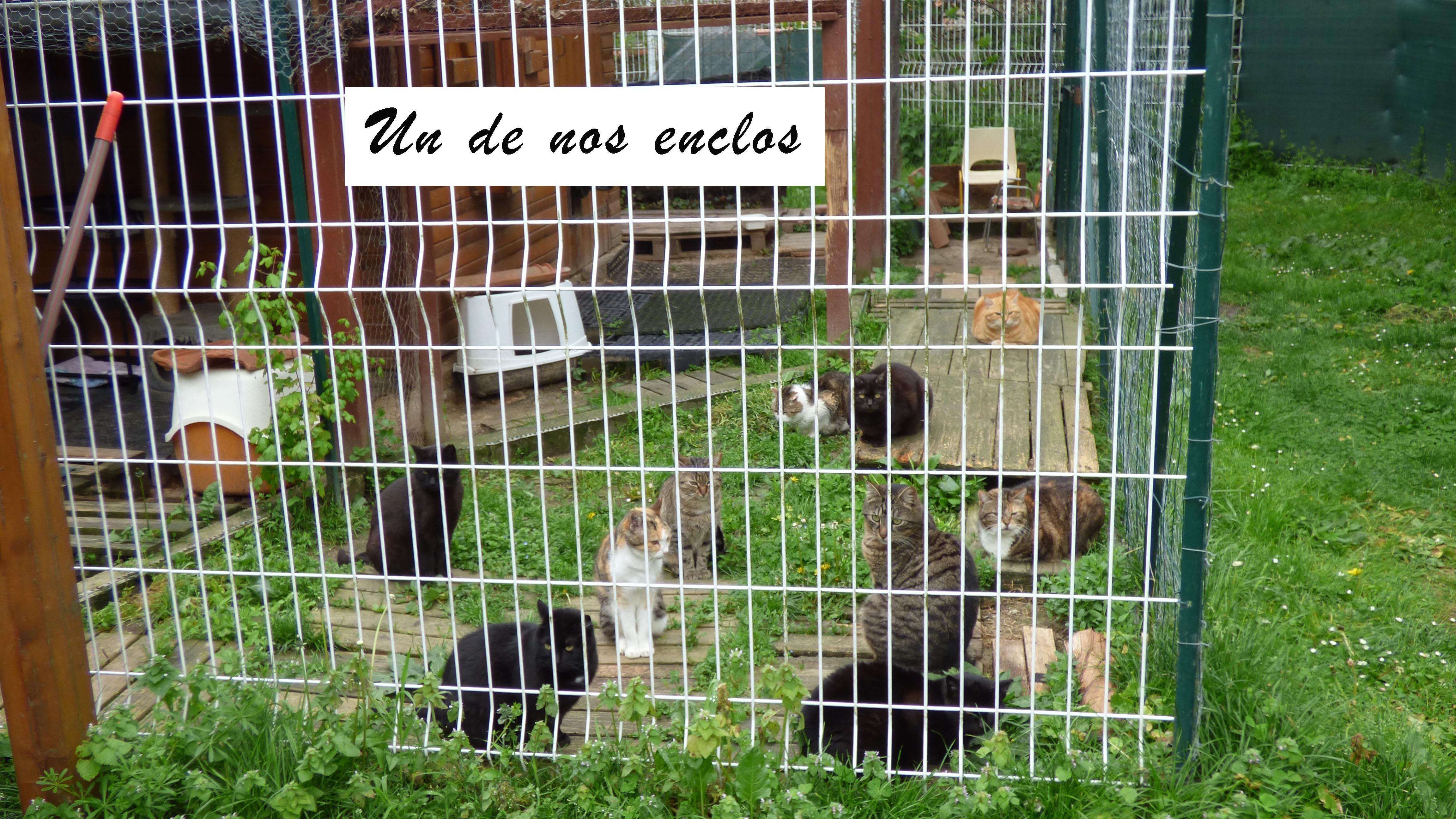 ACTU Animaux - Sos dette vétérinaire - évitons la catastrophe pour ...