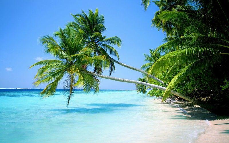 1920x1080 Océano paisajes playa árboles tropicales islas