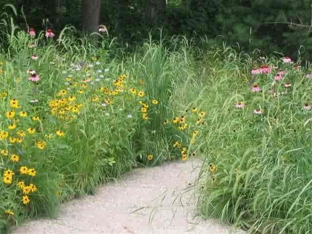 Michigan wildflower landscape pathway through for Wild grass gardens