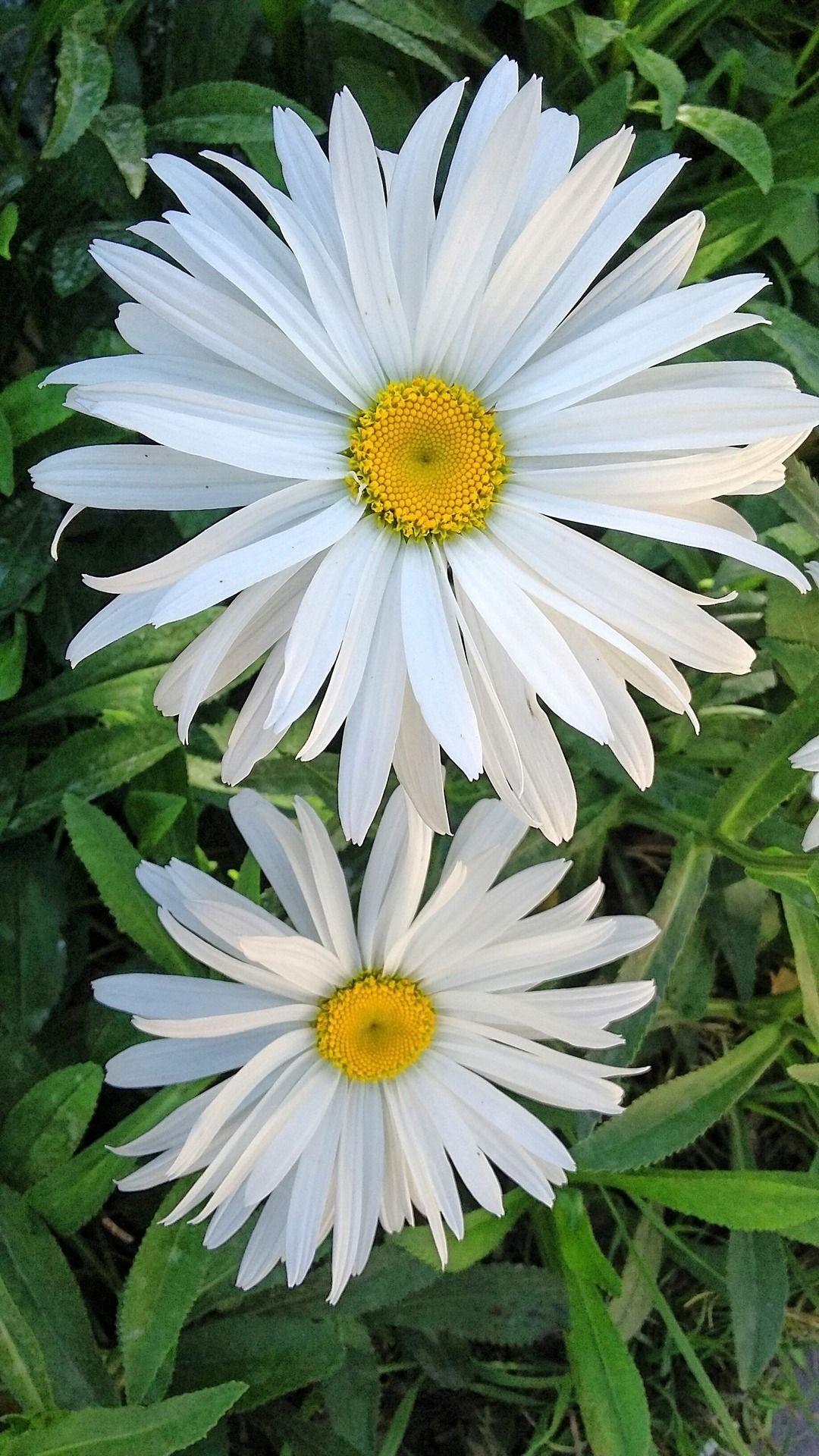 Manejemos los cambios con alegria y tranquilidad fotos - Fotos flores preciosas ...