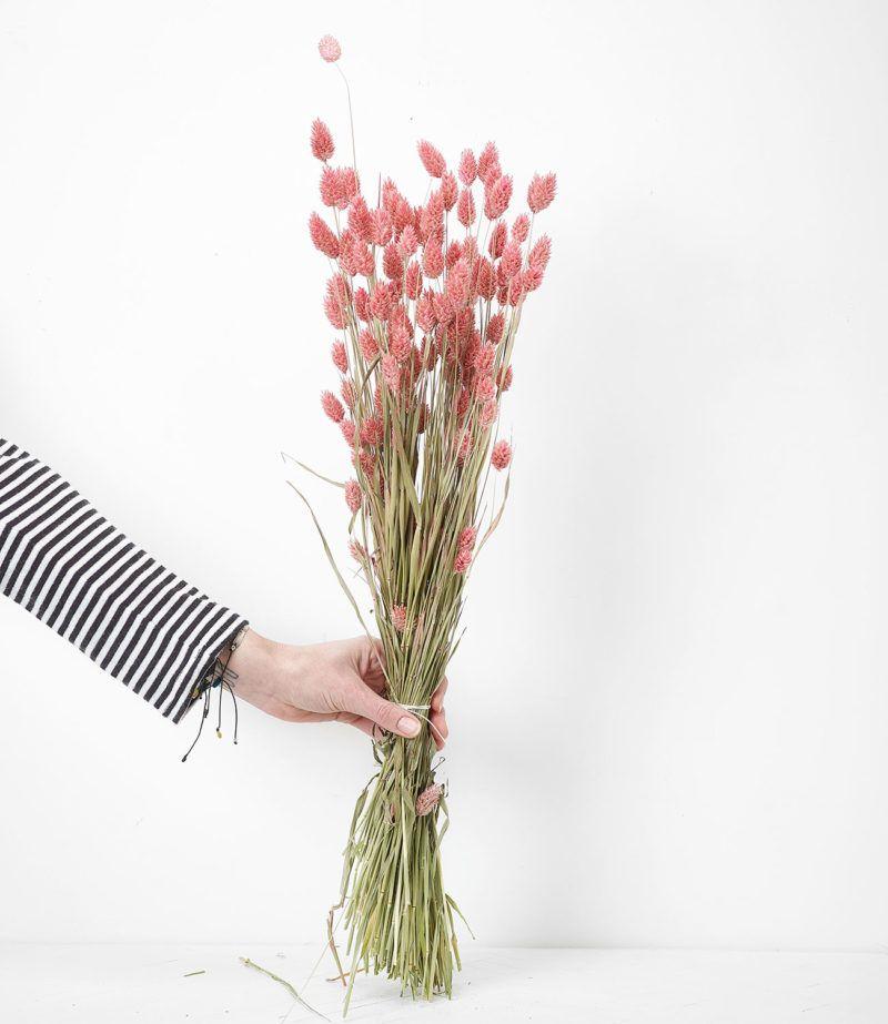 Bouquet Fleurs Sechees Phalaris Rose Fleurs Sechees Fleurs