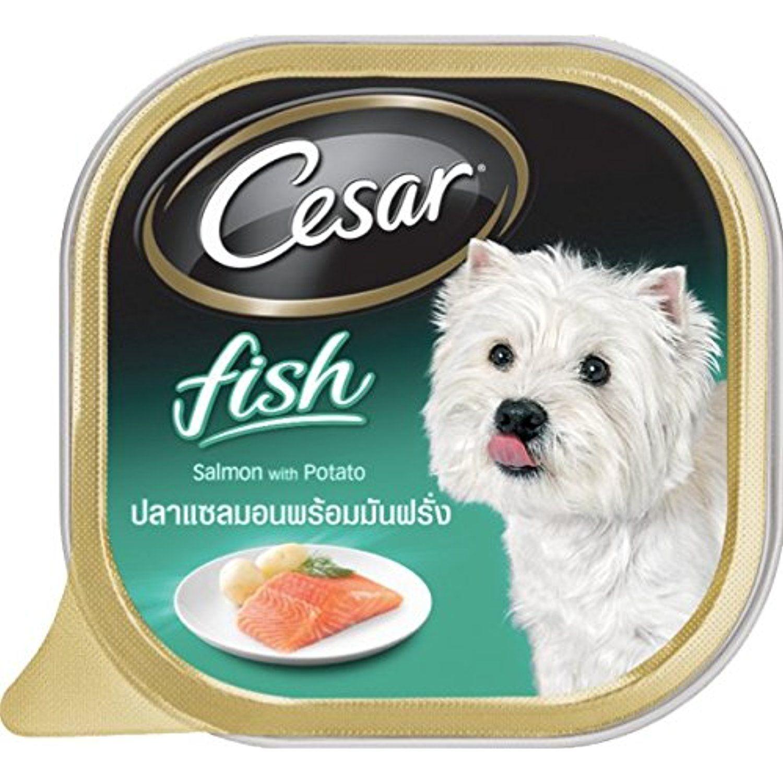 Cesar Dog Food Salmon Potato 3 5 Oz Pack Of 6 The Details