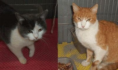 2 kitties saved from Death Row because of my blog. Yay yay yay! (Story if you click on the picture.)