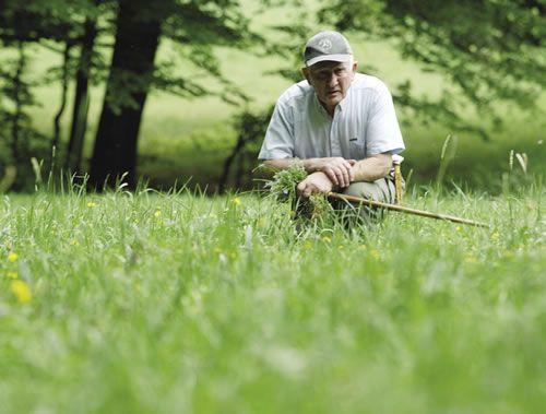 Gyógynövények gyűjtése férgekből és parazitákból