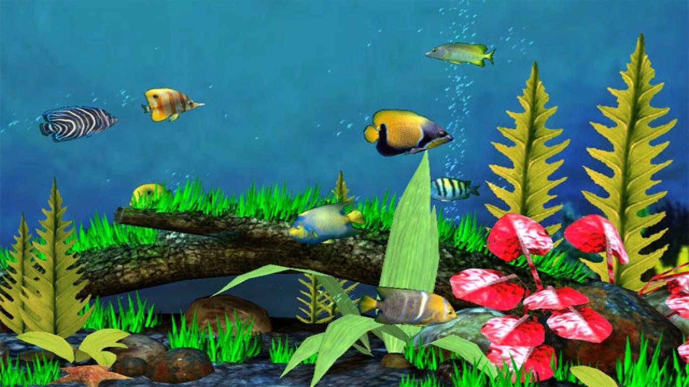 Best Love Wallpaper For Pc : Best Live Wallpaper For Pc HD Wallpapers Pinterest Fish wallpaper and Wallpaper