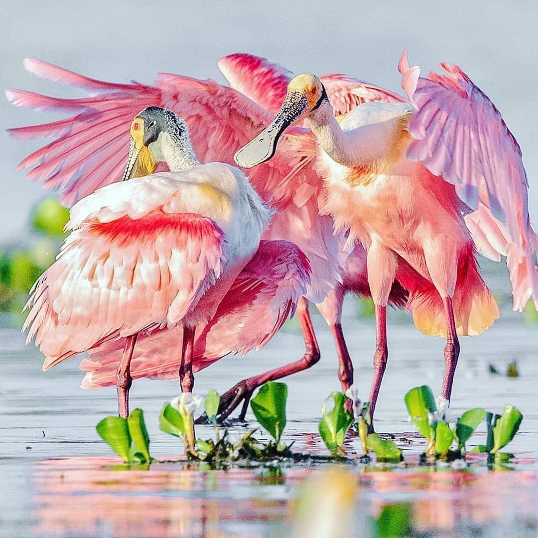 Birding Pantanal Brazil Tour Agence De Voyage Et D Ecotourisme Au