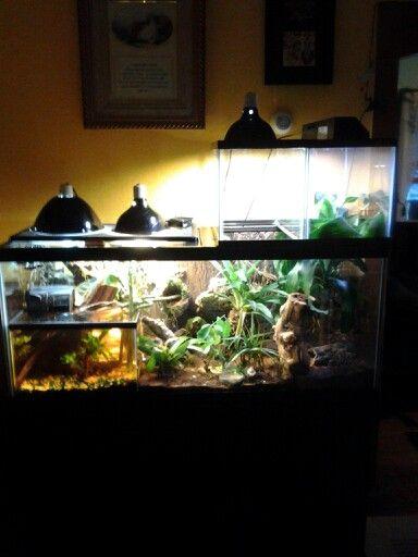 75 gal tree frog Vivarium with gal guppy breeder tank and 10 gal canopy tanks. & 75 gal tree frog Vivarium with 5.5 gal guppy breeder tank and 2 ...