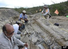 Dinosaur Tail Discovered In Mexico: Paleontologists Uncover 15-Foot-Long Tail