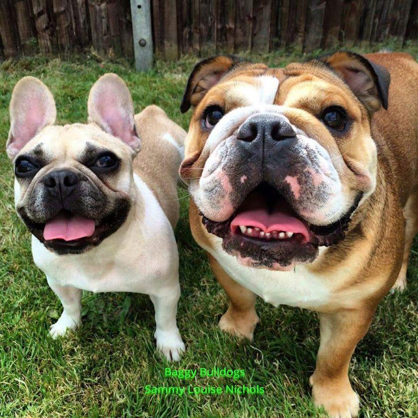 Baggy Bulldogs Baggy Bulldogs S Photos Bulldog Puppies Cute