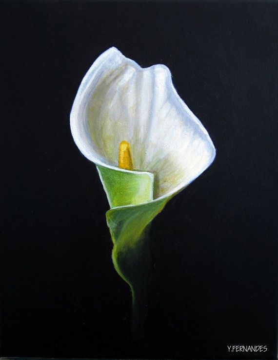 Cala Lily Acrylic Painting 11 x 14 on canvas by ...