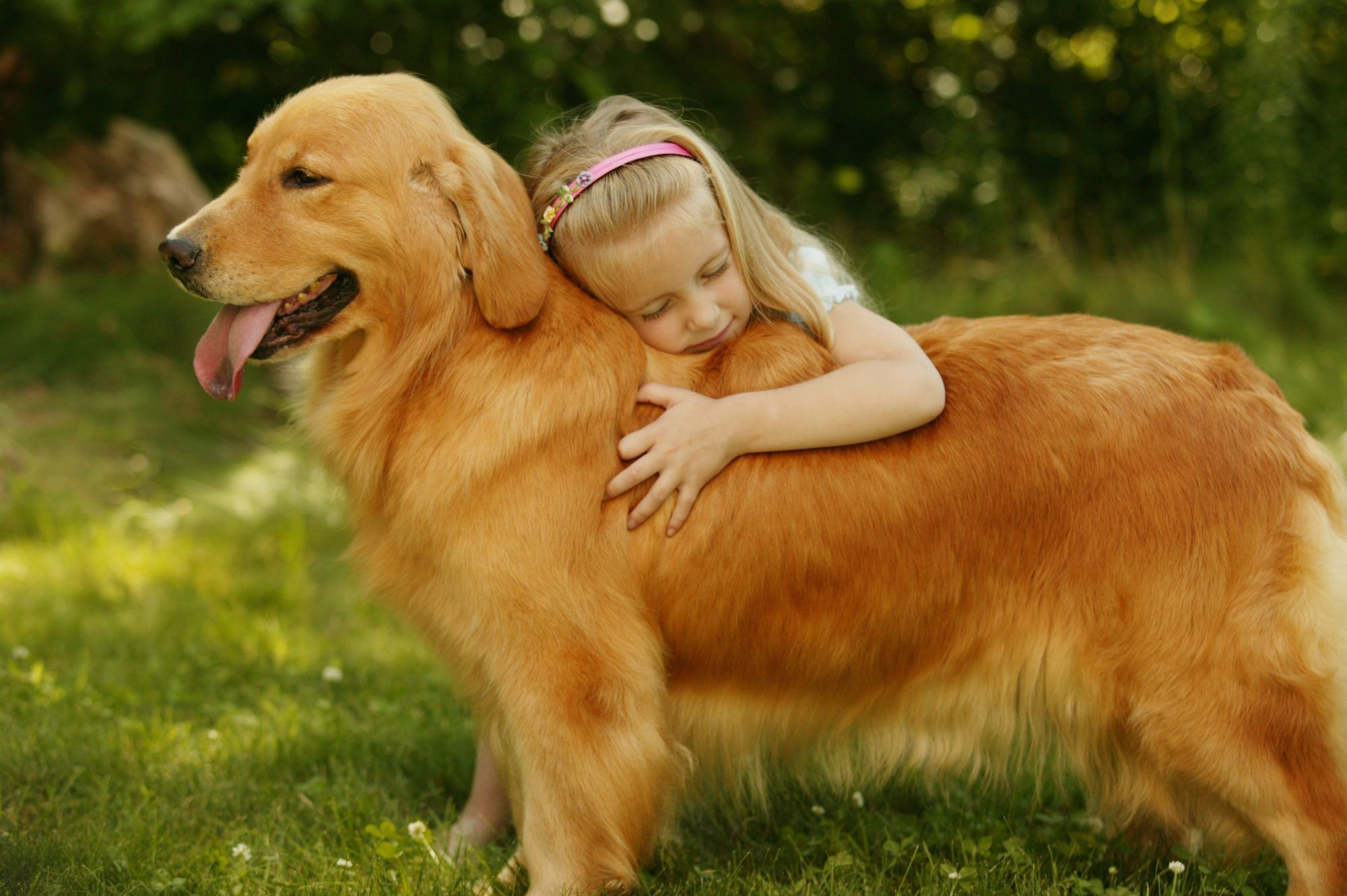 The Best Dog Breeds For Families With Kids In 2020 Dogs Golden Retriever Golden Retriever Puppies