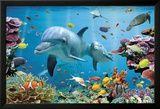 nice Océan tropical avec dauphins  chez AllPosters Check more at http://casadecoration.com/produit/ocean-tropical-avec-dauphins-chez-allposters/
