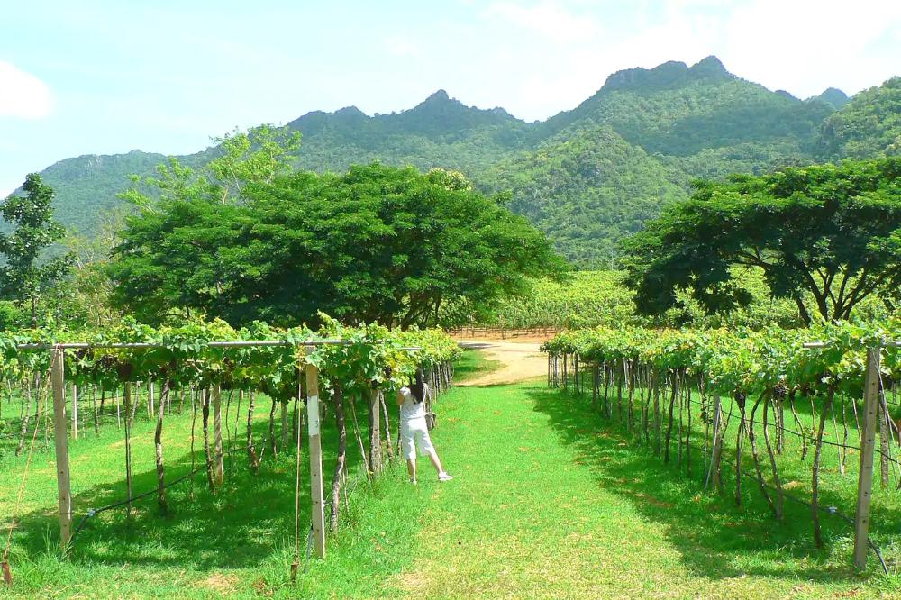 ปักพินในบอร์ด New Latitude Wine Thailand
