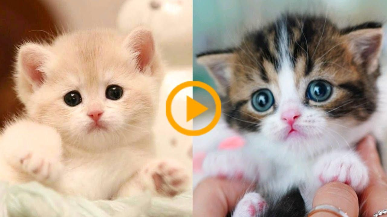 Baby Cats Cute And Funny Cat Videos Compilation 27 Aww Animals Animals Aww Baby Cat Cats Compilation Cute F In 2020 Baby Cats Funny Cat Videos Cute Dogs