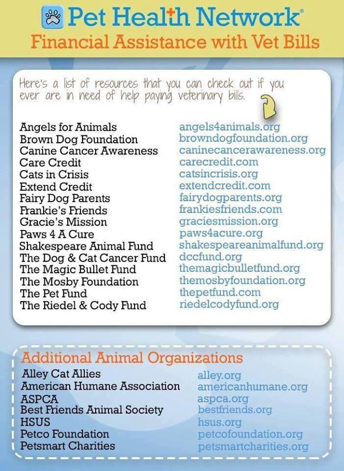 Pet Help Pet Health Canine Cancer Awareness Pets