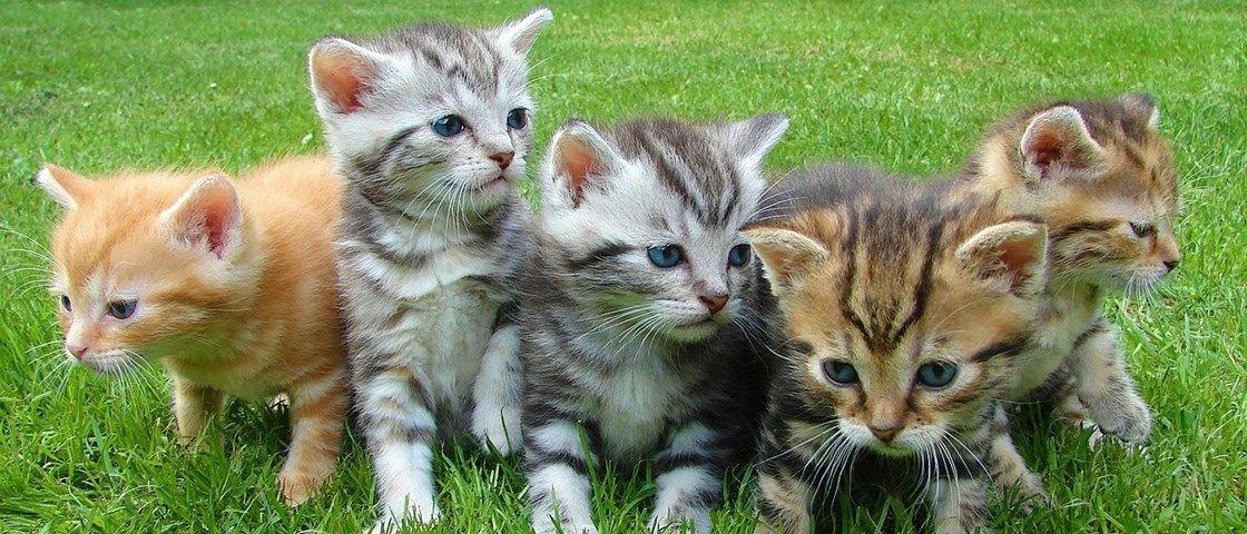 10 ilustrações divertidas mostram as vantagens de ter um gatinho em casa - Mega Curioso