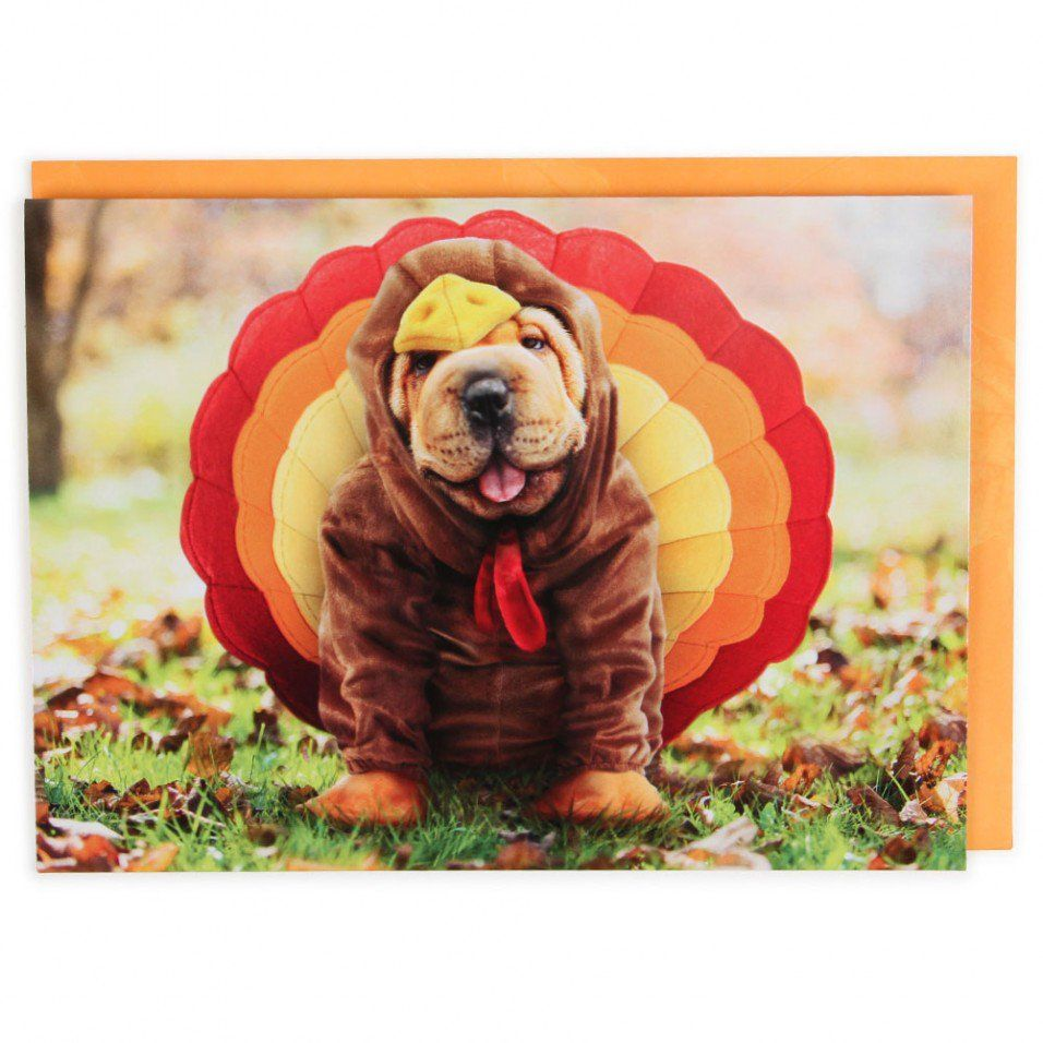 Dog in turkey costume Thanksgiving card Paperchase Dog