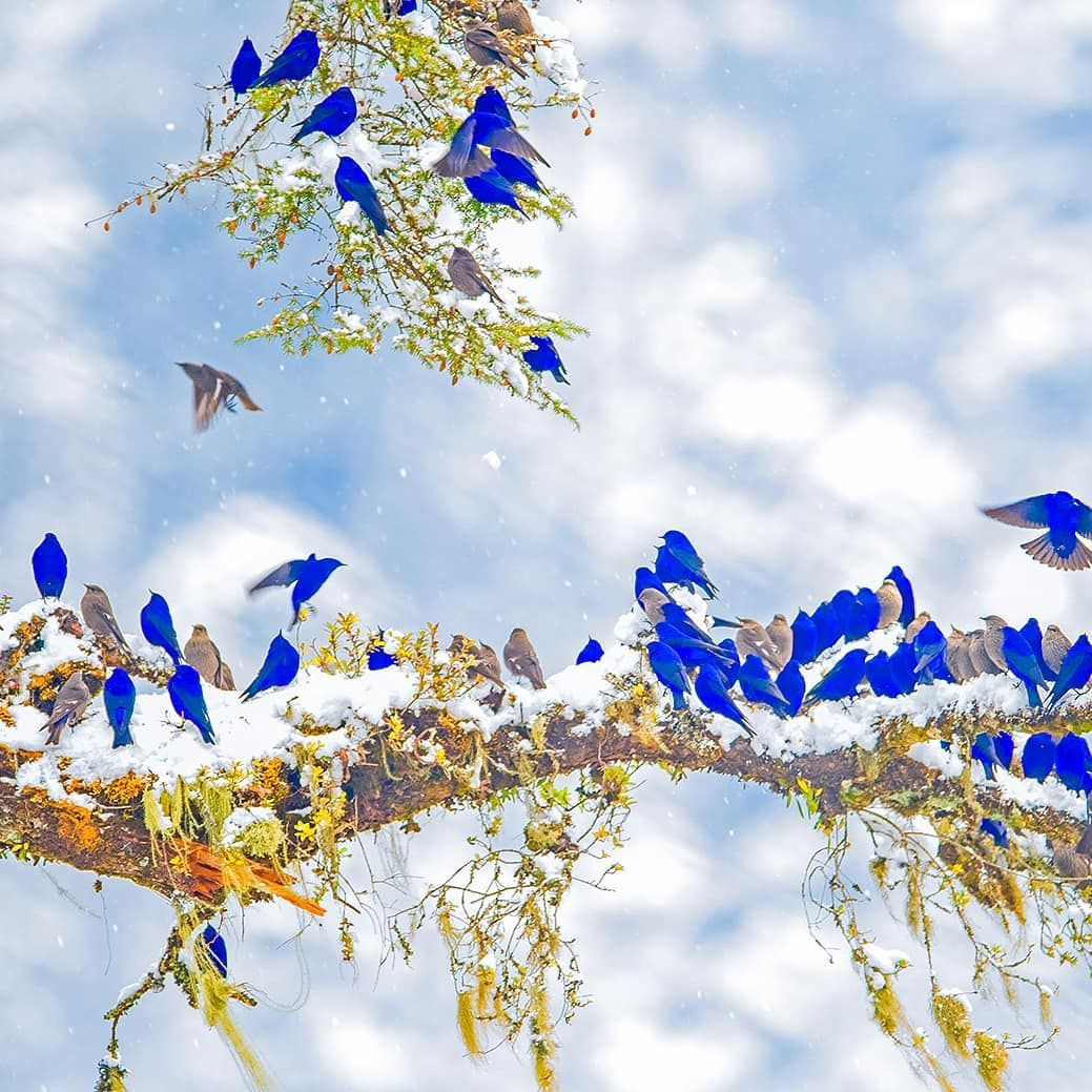 Pin by Cicilou on Curieux de nature Bird pictures, Bird
