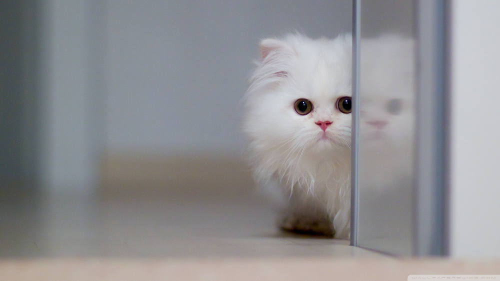 Download Hd Wallpapers Of 305980 Cat Free Download High Quality And Widescreen Resolutions Desktop B Cat Wallpaper Cute Wallpapers For Computer Cat Background