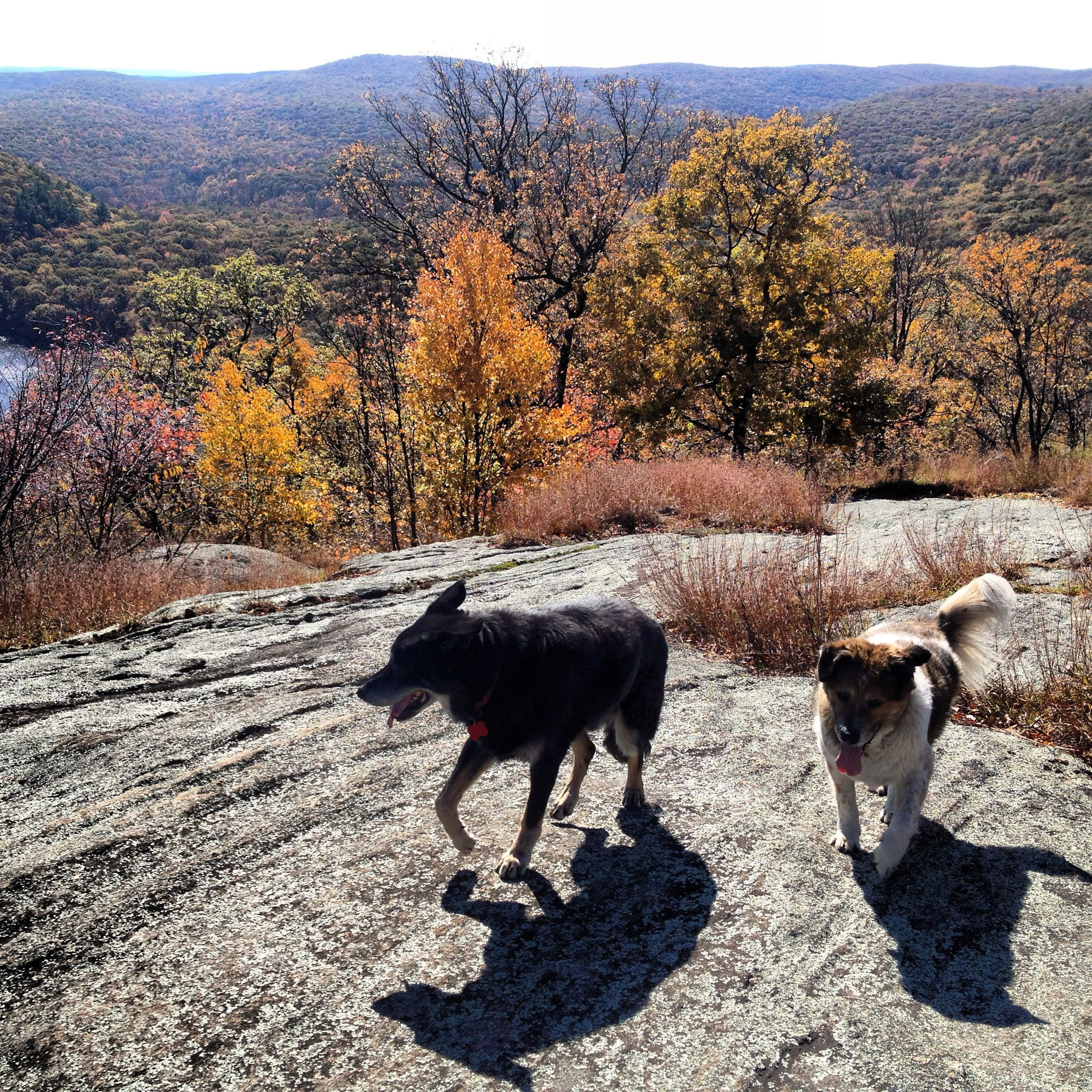 Best Hikes In Harriman A Short List With Maps My Harriman Best Hikes Harriman State Park Day Trip To Nyc