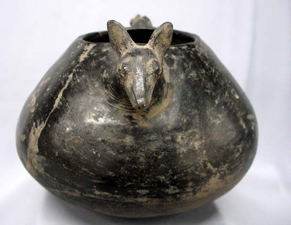 Chihuahua pot from Niesler Mound in Georgia The origins of the Chihuahua have been lost in the mists of time yet new research reveals they once roamed the southern states of Georgia and Tennessee. The discovery was made by analyzing dog effigy pots unearthed in Georgia and Tennessee to determine the most likely breed they represented. ...