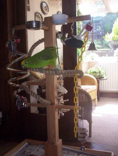 Play Stand Pictures Parrot Forum Parrot Owner's