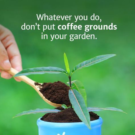 Wver You Do Don T Put Coffee Grounds In Your Garden