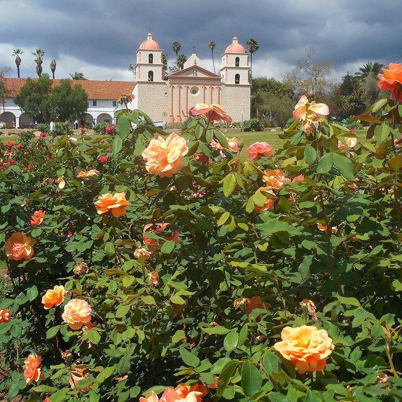 Smell of roses catholic