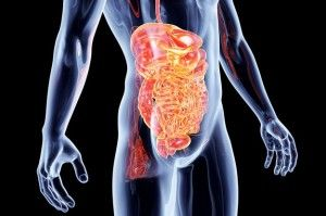 A quick explanation of leaky gut