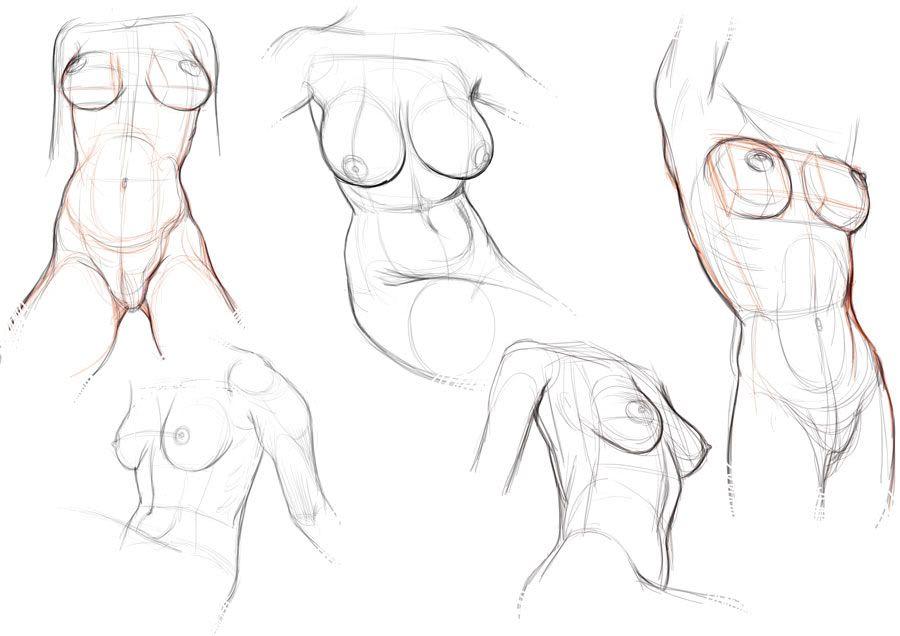 Resultado de imagem para torso drawing reference | Passo a Passo ...