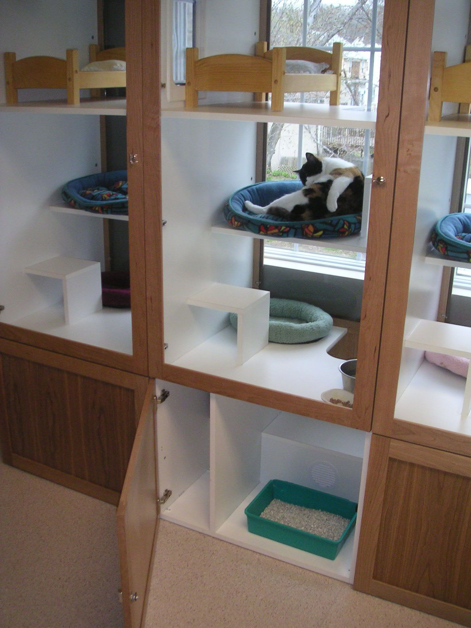Litterbox Idea In Bottom Cabinet Convert This Idea For Outdoor Enclosure Cat Hotel Cat Kennel Dog Boarding Kennels