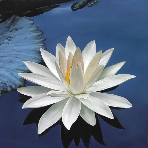 A white lotus symbolizes bodhi sanskrit for enlightenment it it symbolizes a pure body mind and spirit along with spiritual perfection and a pacification of ones nature a lotus flower normally has eight mightylinksfo