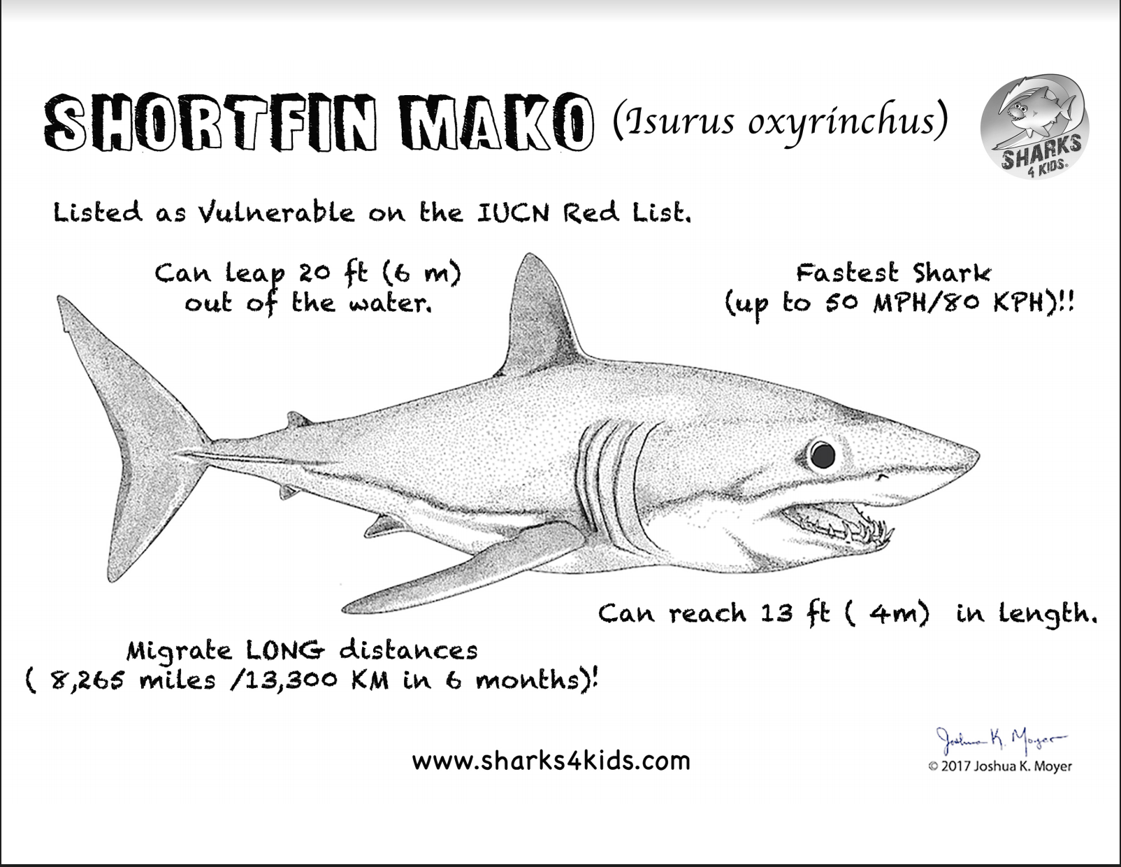 Sharks4kids Learn All About The Shortfin Mako Shark With