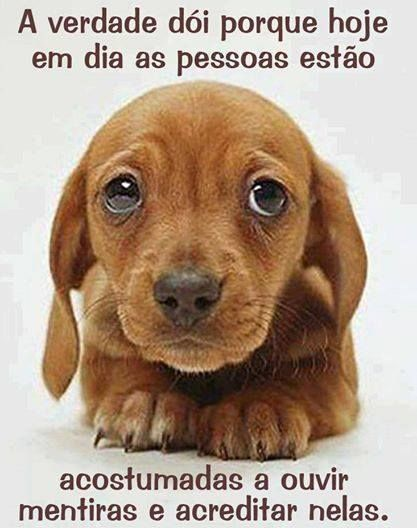 Pin By Dave On Pup Pinterest Puppies Cute Puppies And Dogs
