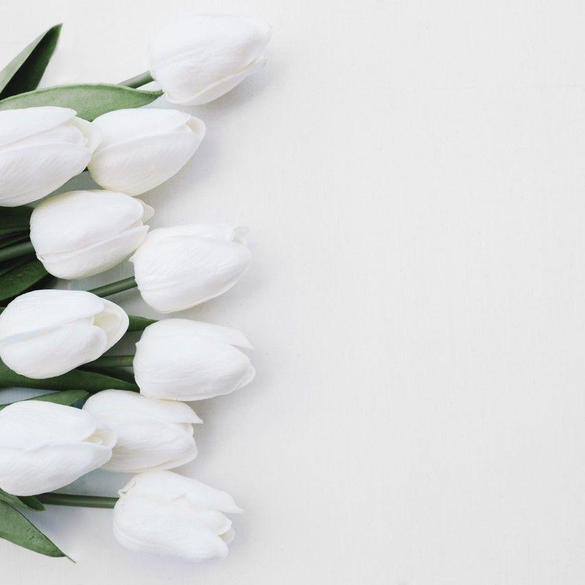 Tulipán Flores Flower Tulipanes Flores Bonitas Fondos De Flores