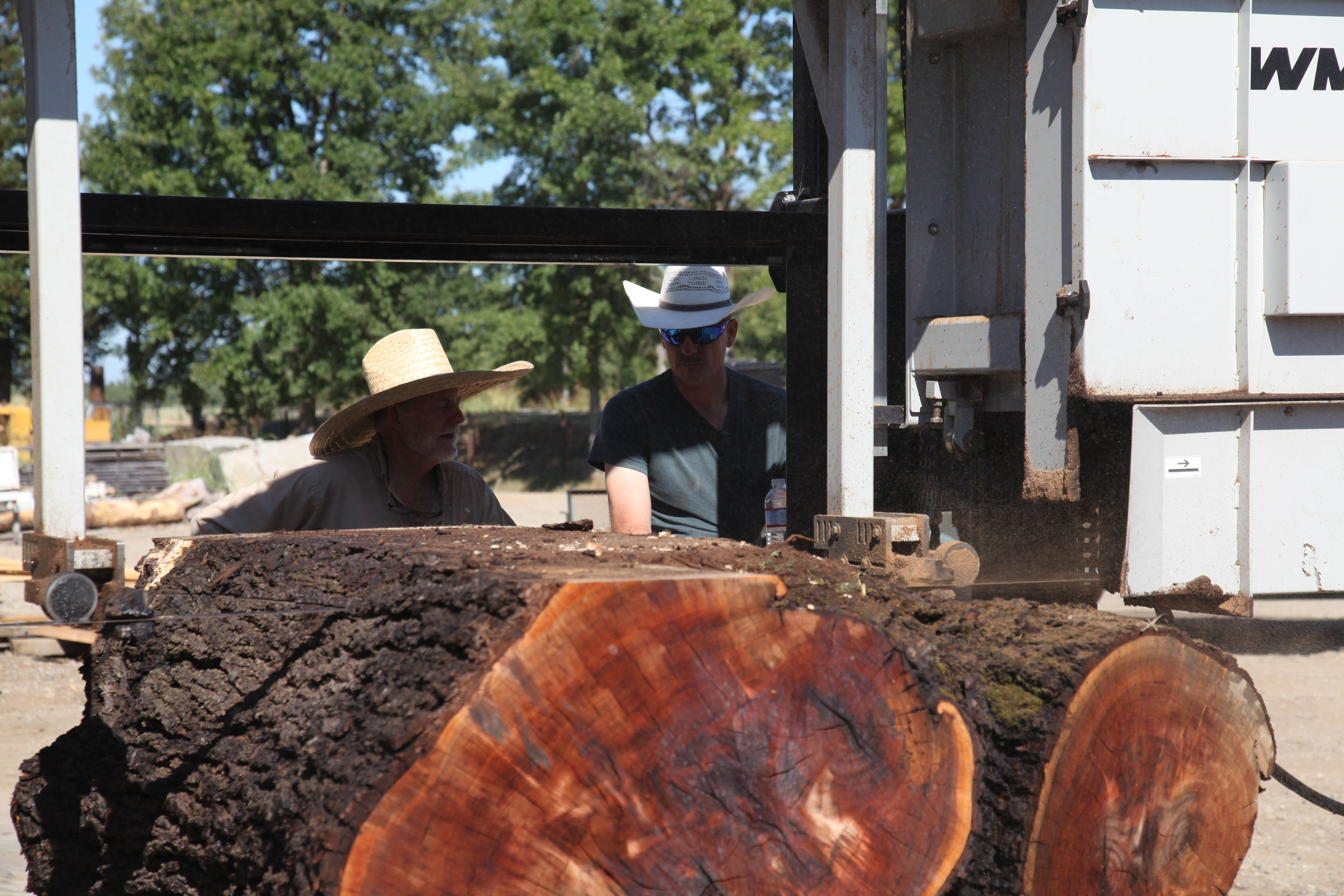 Milling a Walnut crotch on the Wood-Mizer WM1000 sawmill