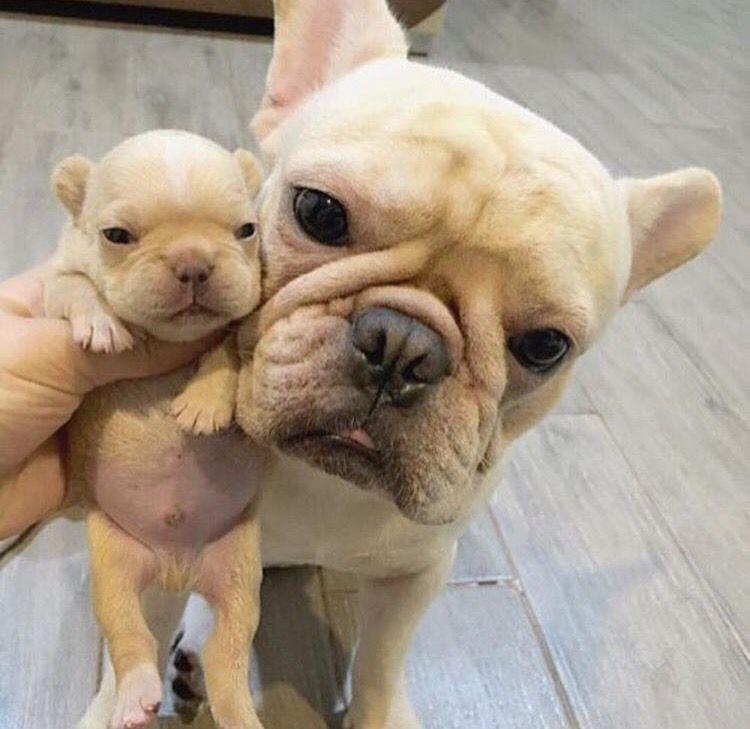 Billionladies Cute Baby Animals Cute Animals