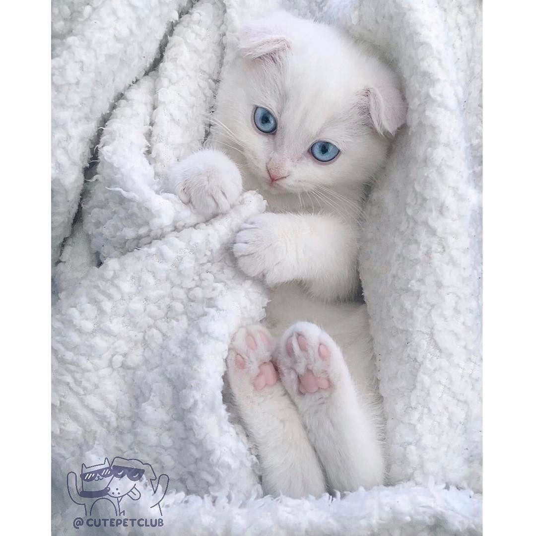 Hugedomains Com Shop For Over 300 000 Premium Domains Kittens Cutest Cute Cats Beautiful Cats