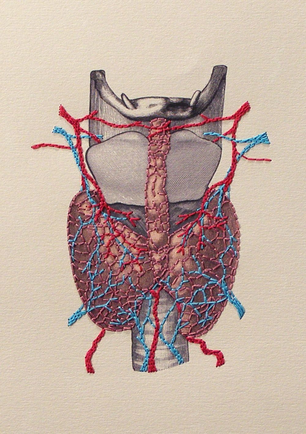 Thyroid Gland Anatomy. Endocrinology. Paper Embroidery. Anatomical ...