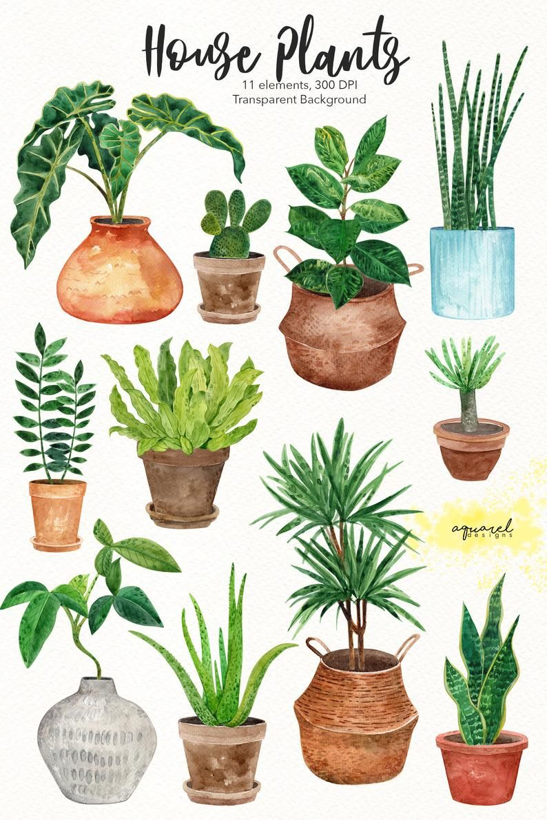 Pin By Candela On Plants In 2021 Plant Art Print Watercolor Plants Plant Painting