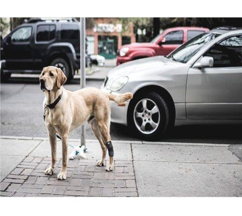 Best Dog Leg Braces In 2019 Reviews By Alphatoplist Com In 2020