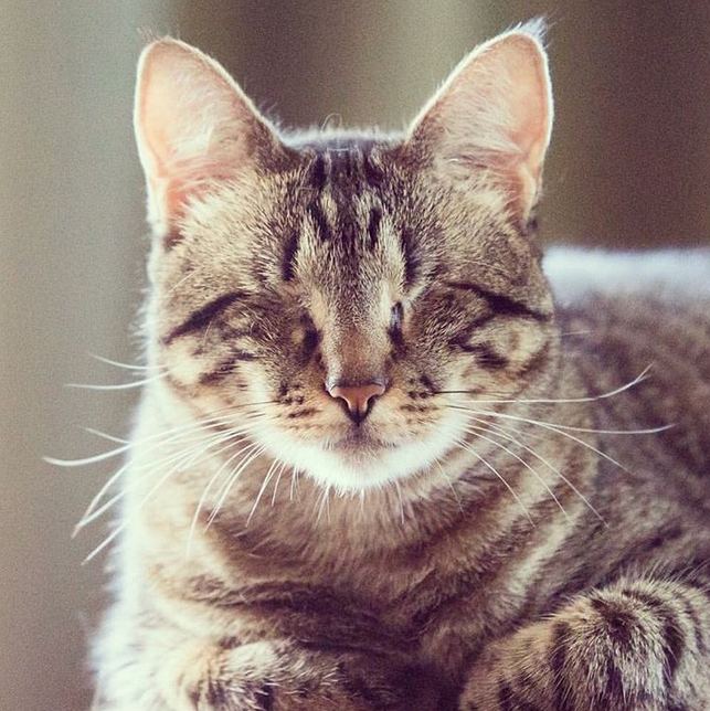Meet The Beautiful Blind Cat Who Lost Both Of Her Eyes But Found