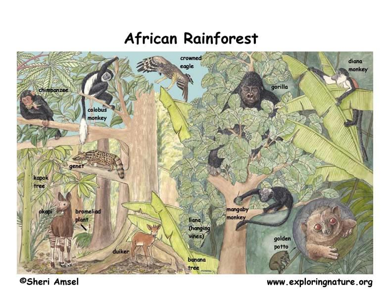 Http Www Exploringnature Org Graphics Biomes African Rf W Text
