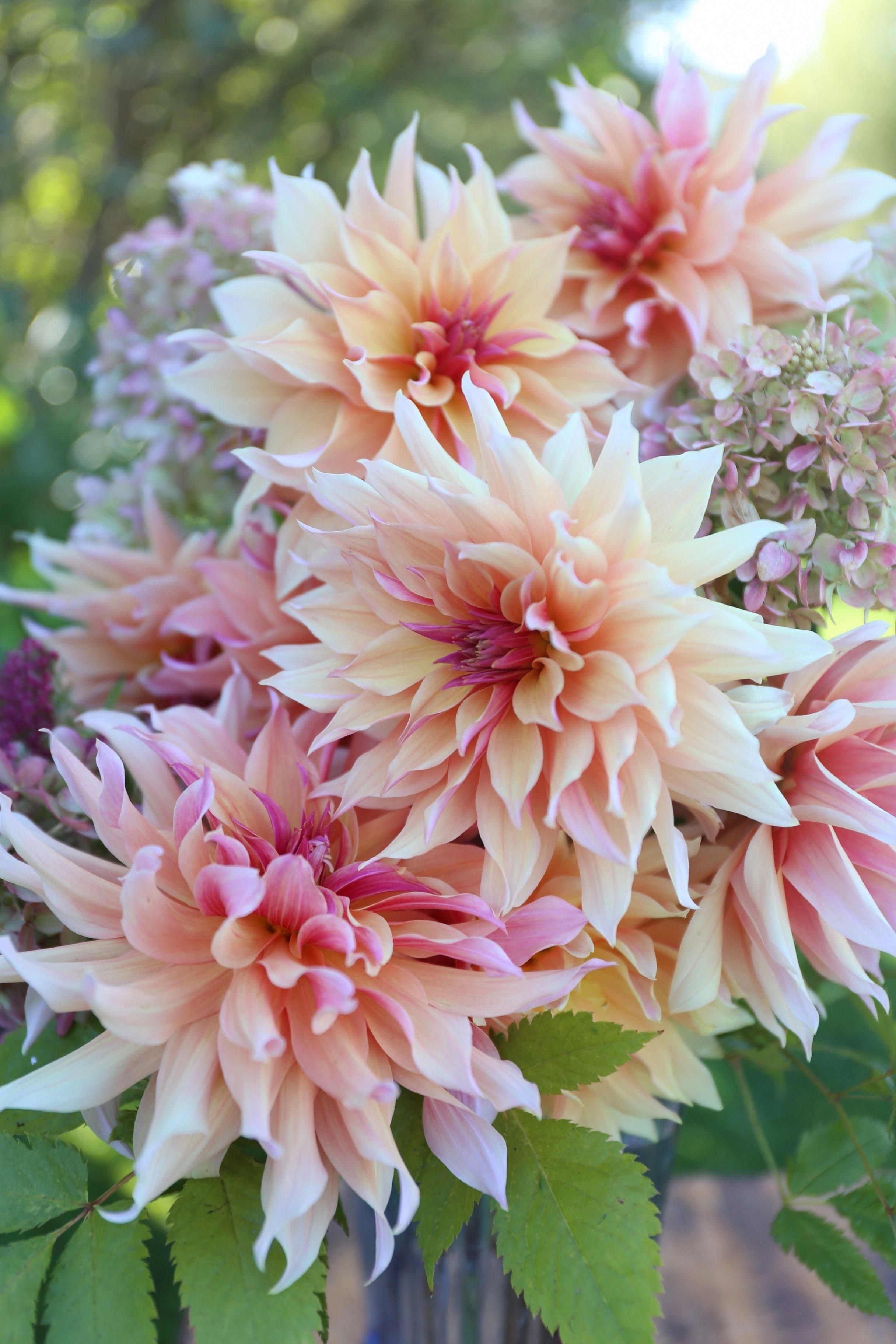 Outdoor Lighting Ideas For Your Garden Dahlia Flower Faux Flowers Arrangements Flower Garden Design