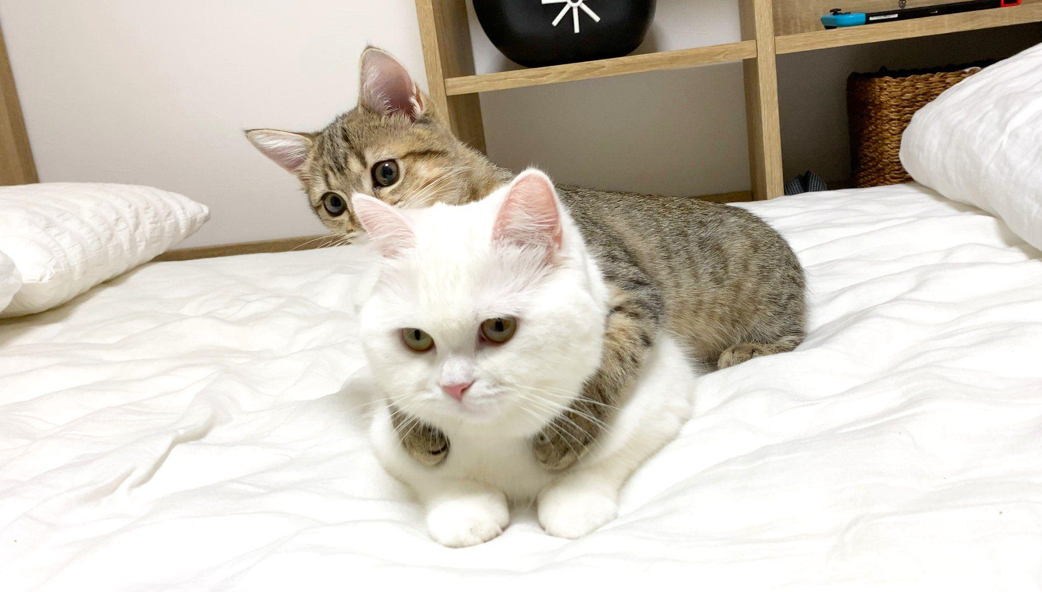 ねこ べ や ポム さん ポムさんとしまちゃんはかわいい姉妹!年収は1000万円を突破