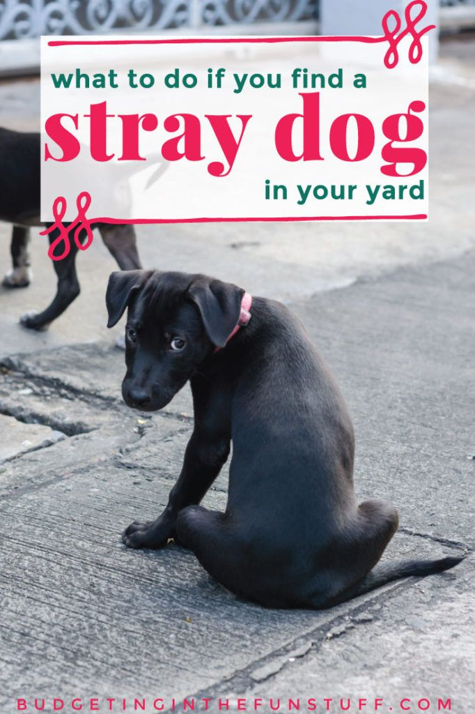 Steps To Take If You Find A Stray Dog Dogs Stray Dog Rescue