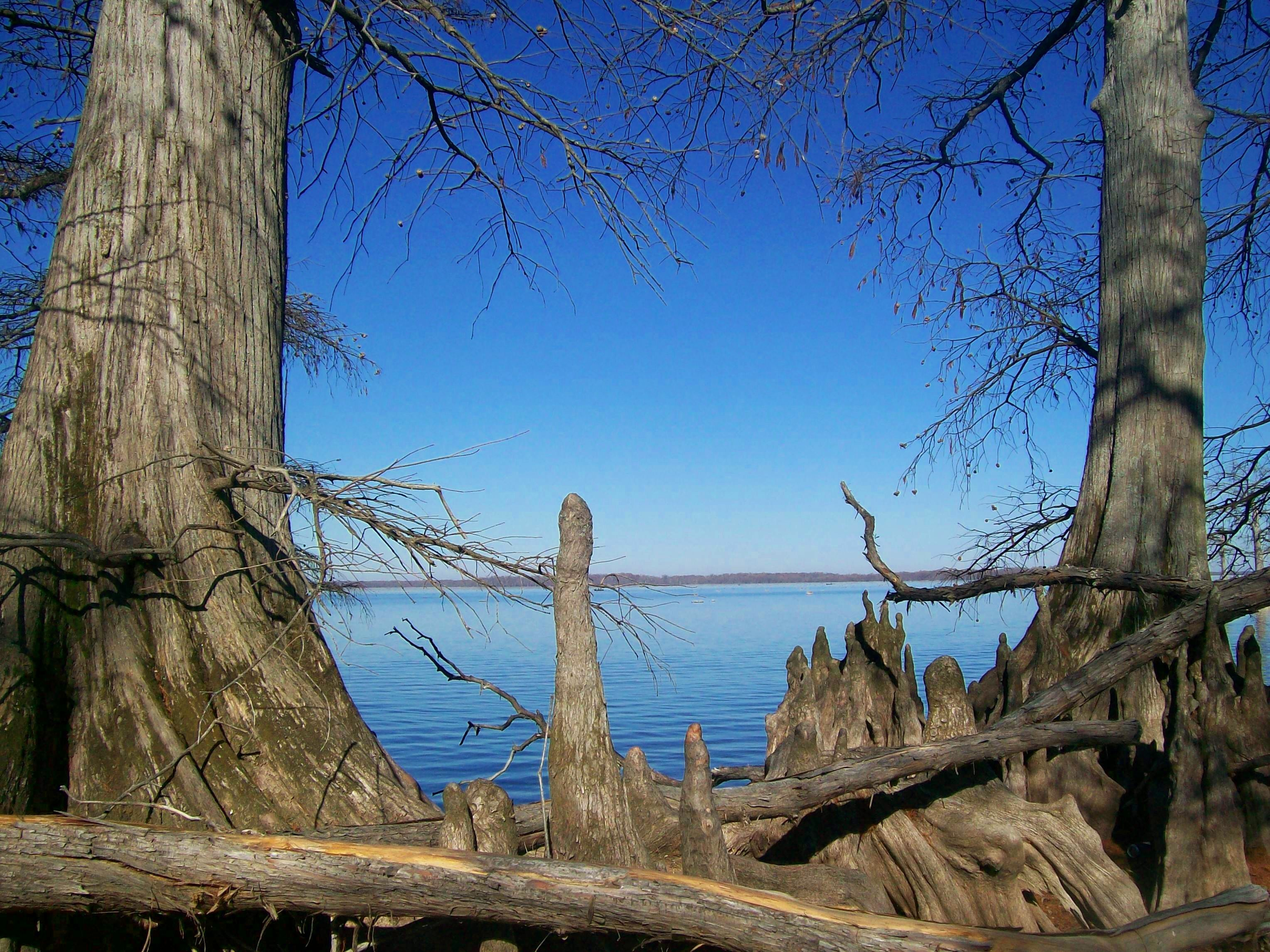 Reelfoot Lake, Tiptonville, TN